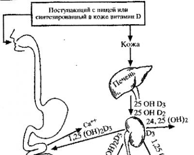 Схема активирования витамина D