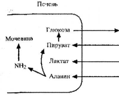 циклом лактата (цикл Кори)